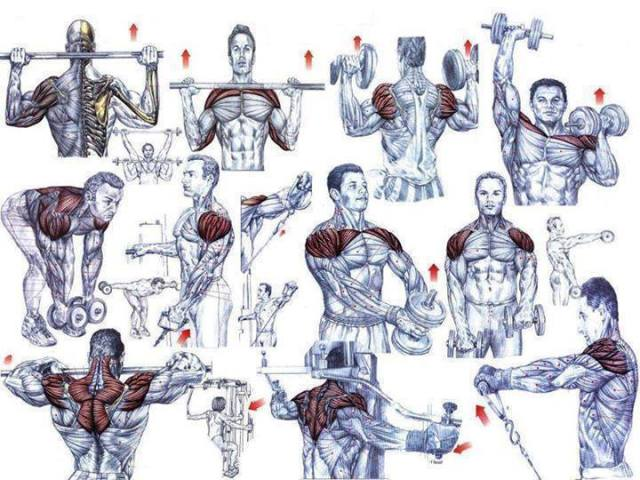 Body Workout Muscles