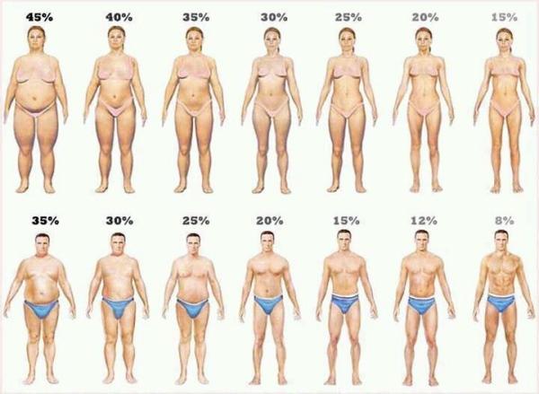 cartoon-women-and-men-visual-body-fat